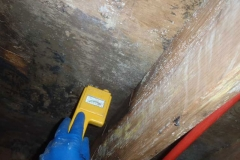 686833-black-mold-mildew-columbia-sc