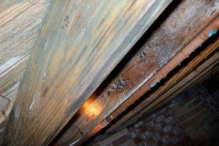 686843-mold-issues-columbia-sc