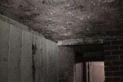 686847-mold-removal-columbia