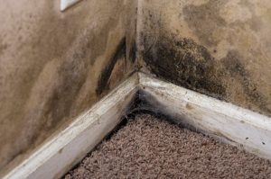 mold cleanup irmo sc, mold removal irmo sc, mold removal lexington sc, mold cleanup columbia sc, mold cleanup Lexington, mold removal columbia sc